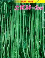 豇豆种子系列:定州市青红兄弟商行