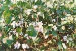复合肥料:潍坊稀尔奥特肥业有限公司
