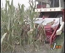 玉米收割机改装喜讯:河南省睢县嘉禾种业